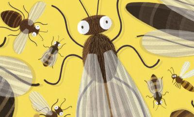 Den store boken om bier